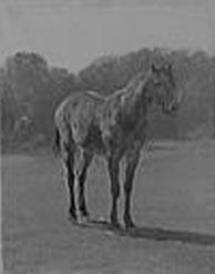 Etude de cheval par Rosa Bonheur