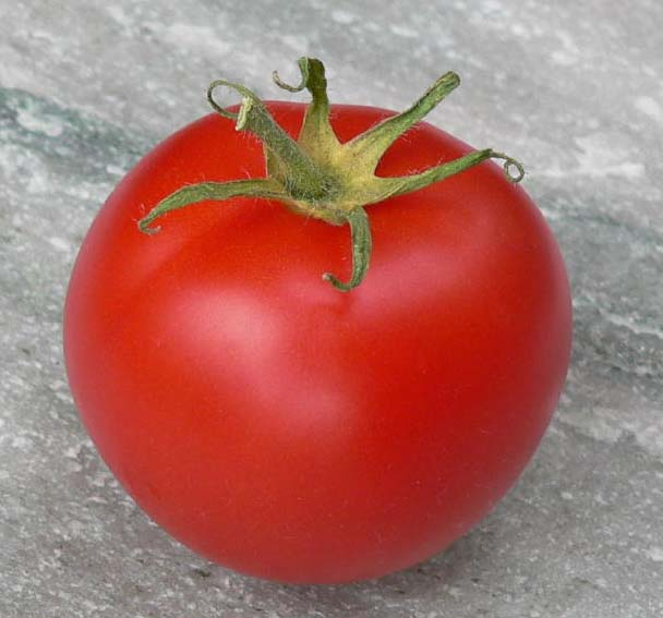 Tomate Canabec